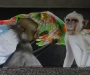 case-von-maclaim-graffiti-in-frankfurt-an-der-friedensbrc3bccke-5